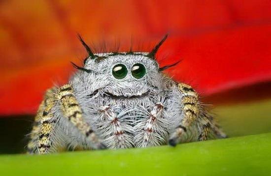 Zoom kỹ vẻ đẹp của loài nhện kute nhất thế giới