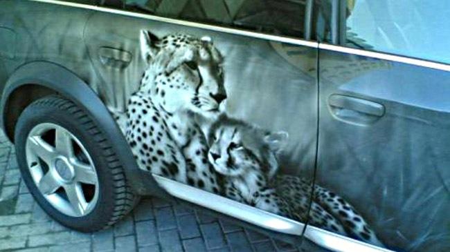 Lạ mắt với Audi A6 in hình động vật - Hình 1