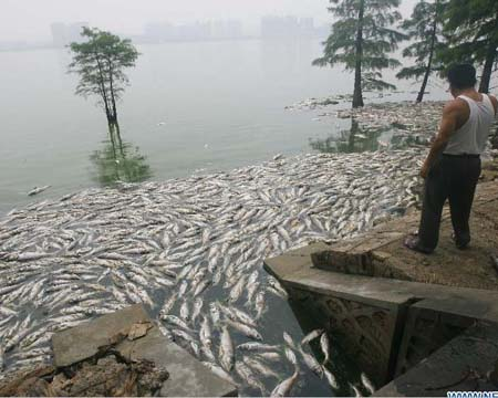 Rùng mình cá chết trắng mặt hồ vì ô nhiễm - Hình 1