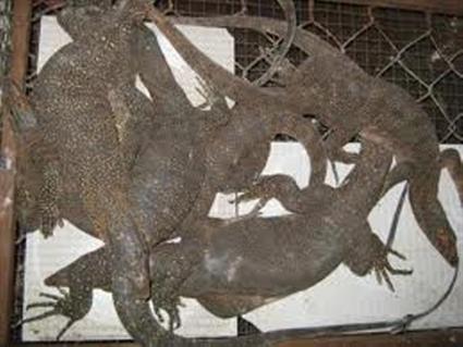 Kiểm tra ôtô tải, phát hiện 1,9 tấn động vật quý hiếm - Hình 1