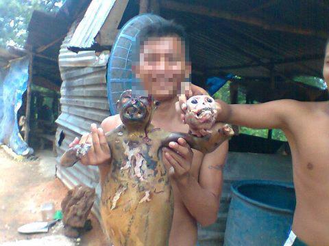 Phẫn nộ cảnh đập đầu, lột da, vặt lông... khỉ dã man - Hình 2