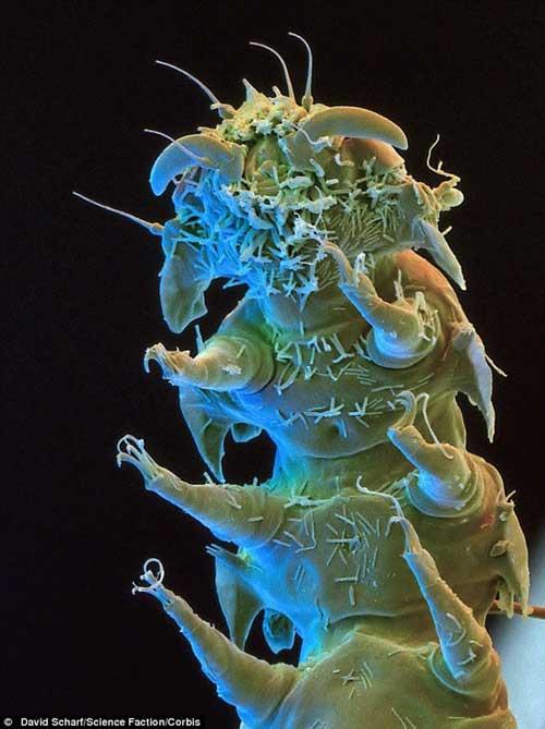 Sinh vật xấu xí, sống dai nhất trên Trái đất - Hình 10