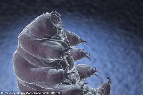 Sinh vật xấu xí, sống dai nhất trên Trái đất - Hình 6