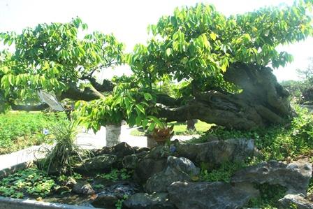 Trình làng cây cảnh quý tại vườn thượng uyển vua Nguyễn xưa