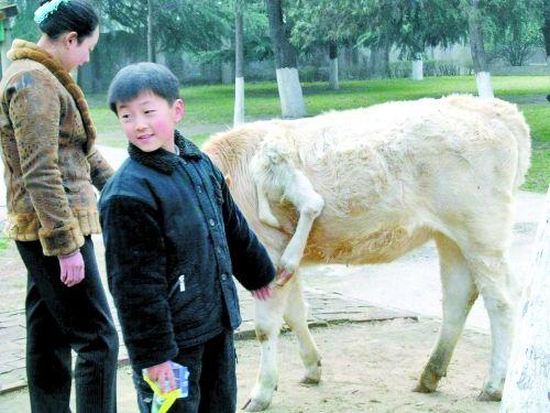 Lợn 3 mõm chứa đầy răng gây xôn xao Hà Nam Trung Quốc