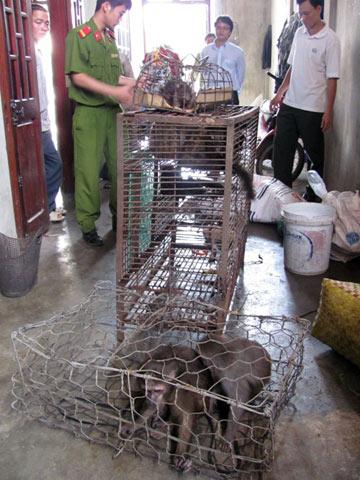 Phát hiện nhiều vụ tàng trữ động vật hoang dã - Hình 1