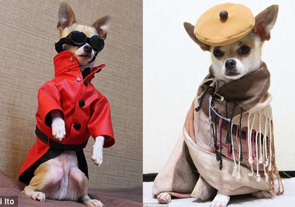 Những chú chó kì lạ trên khắp thế giới
