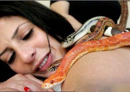 Massage bằng rắn ở Israel