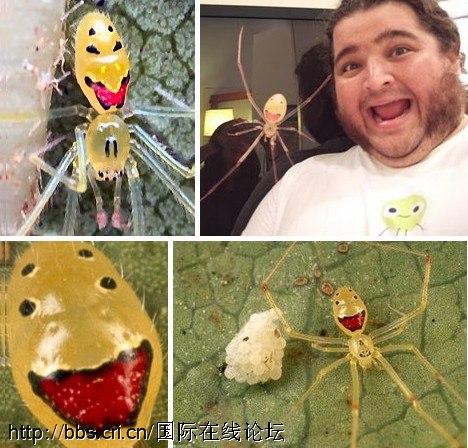 Những chú nhện có nụ cười ma quái