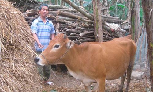 Bò đẻ ra quái thai, cả làng mất ngủ