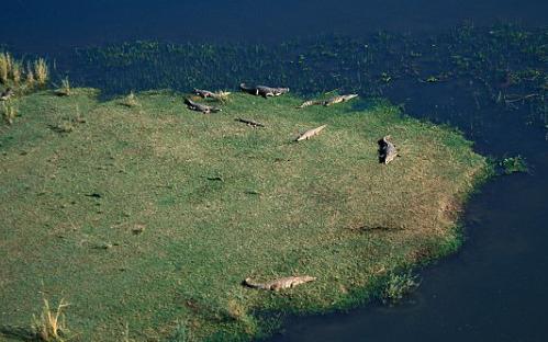 Du khách Anh kinh hoàng trước cảnh cá sấu ăn thịt người
