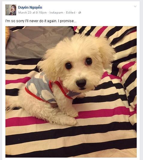 Hoa hậu Kỳ Duyên khoe ảnh cún cưng mặc việc bị chê mắt xếch - Hình 1