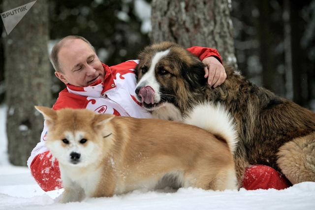 Tình yêu động vật của Tổng thống Putin