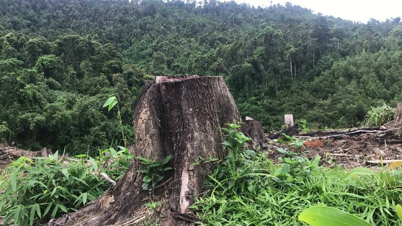 Nghệ An bị yêu cầu làm rõ hàng loạt vụ phá rừng đầu nguồn