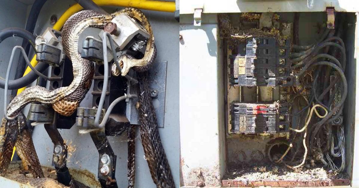 Cả phố đột ngột mất điện, thợ điện đến kiểm tra thì phát hiện cảnh tượng kinh hoàng