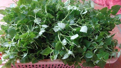 Loại rau đắt hơn thịt, nhiều nước xem là thần dược, ở Việt Nam chỉ là cỏ dại