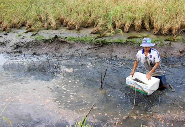Xả nước cứu rừng khiến hàng nghìn ha nông nghiệp bị ảnh hưởng - Hình 1