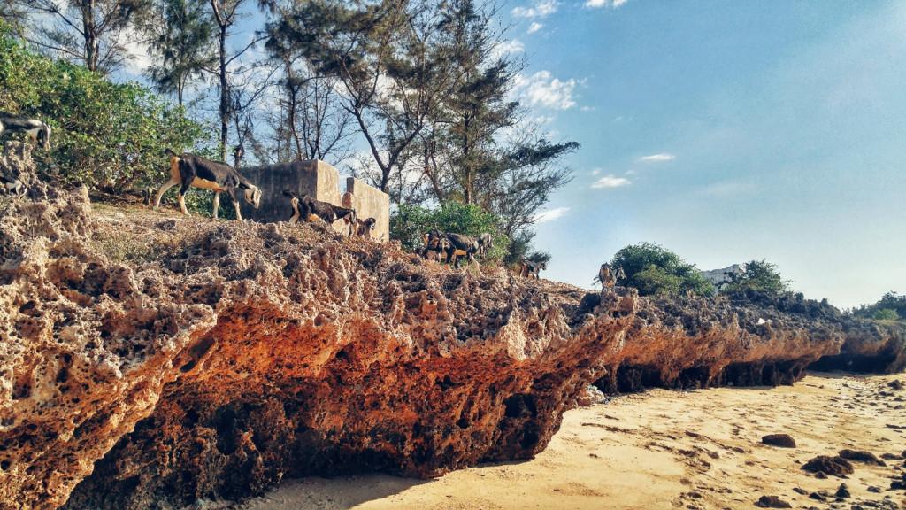 Hè kỳ thú trên đường biển Nam Trung Bộ: Chặng Phan Rang - Nha Trang