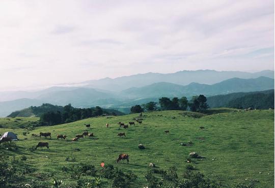 Cắm trại, check-in chất lừ tại cao nguyên Đồng Cao