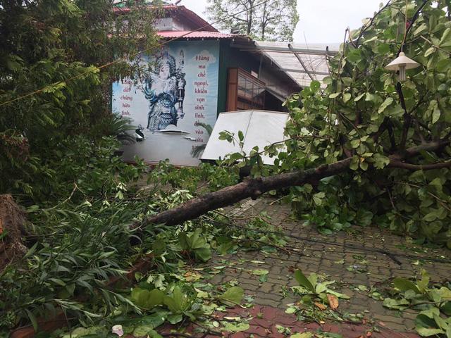 Hình ảnh thành Vinh ngổn ngang sau bão
