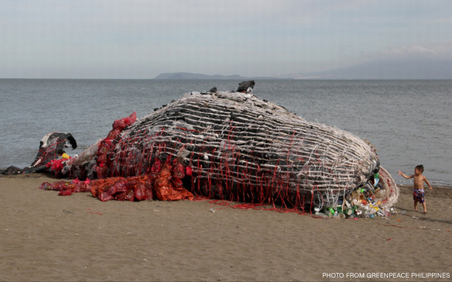 Thấy cá voi chết dạt vào bờ biển người dân lập tức đến xem và sốc khi nhìn thấy thứ trong miệng cá