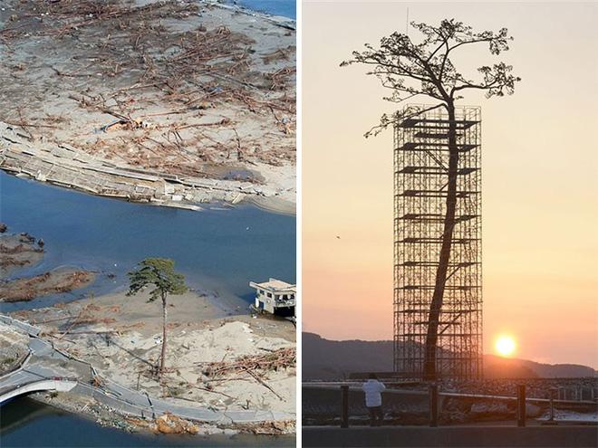 Đây chính là minh chứng hùng hồn về sức sống mãnh liệt của cây