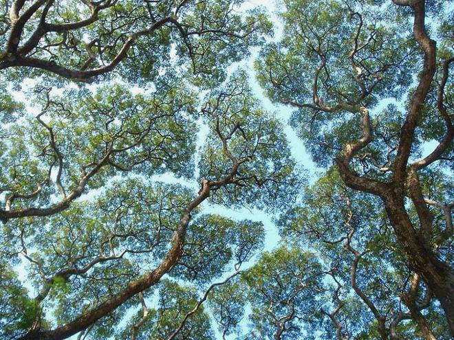 Không phải ảnh photoshop, đây là hiện tượng cực lạ ở một số loài cây