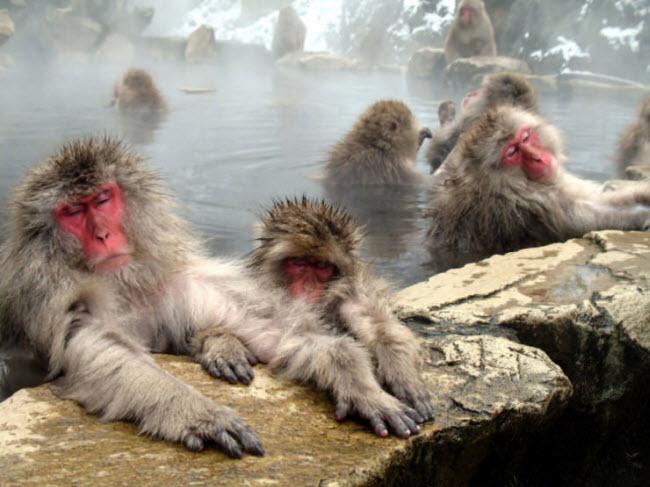 Khám phá 10 kỳ quan thiên nhiên ở Nhật Bản