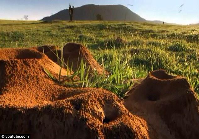 Không thể tin nổi: Cả thành phố khổng lồ của kiến sâu 8m, rộng 46m2 dưới lòng đất