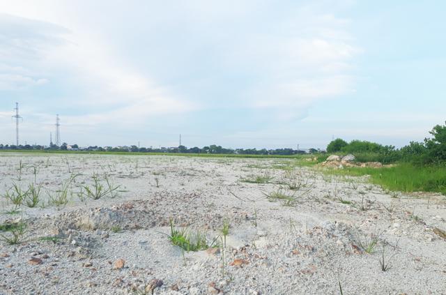 Doanh nghiệp cuống cuồng san lấp hàng chục nghìn m2 đất lúa