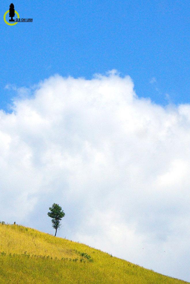 Xách ba lô đi tìm một mùa vàng rất khác ở Mường La