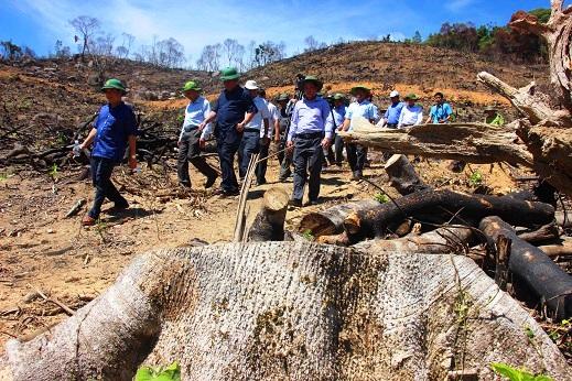 Ai chủ mưu tổ chức phá rừng quy mô lớn tại Bình Định?