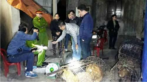 """Ảnh: Rợn người với """"đồ nghề"""" của đường dây trộm và tiêu thụ chó"""