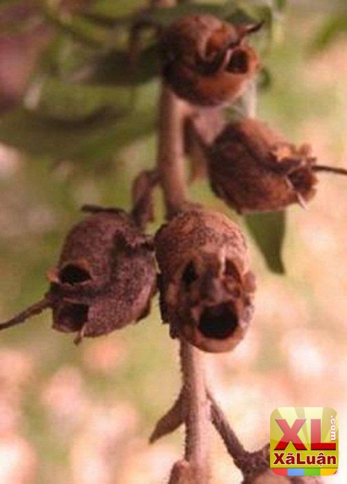 """Chậu cây trong nhà đột nhiên """"trào"""" ra toàn """"máu tươi"""", hôm sau bỗng ra hoa hình sọ..."""