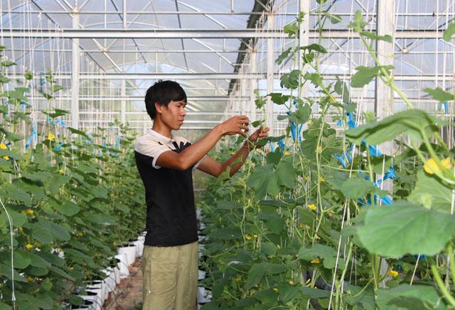 Ông Thào Xuân Sùng: Tôi gắn bó trọn đời với nông nghiệp, nông thôn