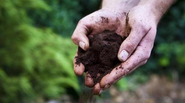 Tự trồng rau sạch mà không biết những mẹo làm vườn này thì quá phí