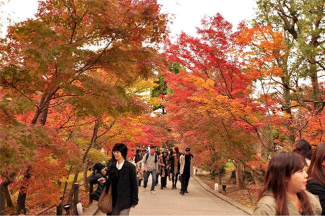 Ảnh: Tuyến phố Thủ đô trồng hàng trăm cây phong lá đỏ như Nhật Bản