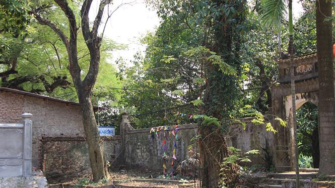 Cận cảnh cây sưa trăm tỉ ở chùa Vĩnh Phúc, Hà Nội - Hình 9