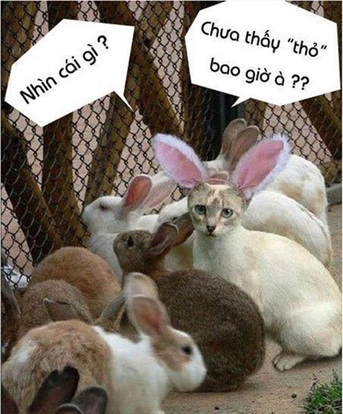 Những hình ảnh động vật chế hài hước và ngộ nghĩnh nhất - Hình 10