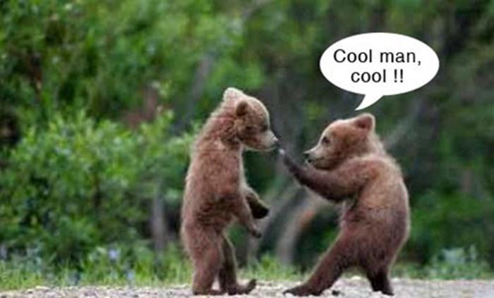 Những hình ảnh động vật chế hài hước và ngộ nghĩnh nhất - Hình 9