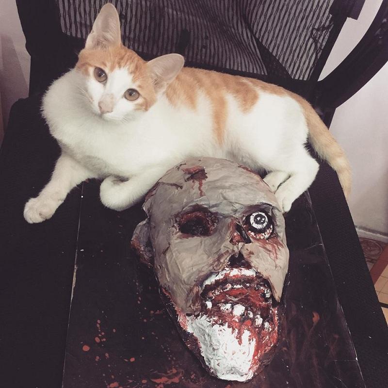 Chú mèo số nhọ nhất năm: Đáng yêu thế này mà cô chủ cho đeo hết mặt nạ chó đến mặt nạ thổ dân để troll - Hình 4