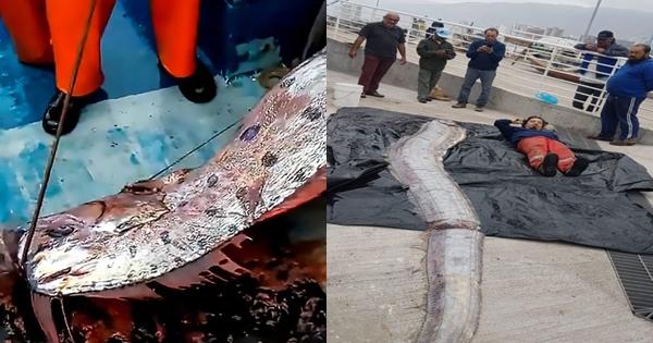 Bắt được cá rồng biển dài 5m - ngư dân lo sợ thảm họa sắp xảy ra - Hình 1
