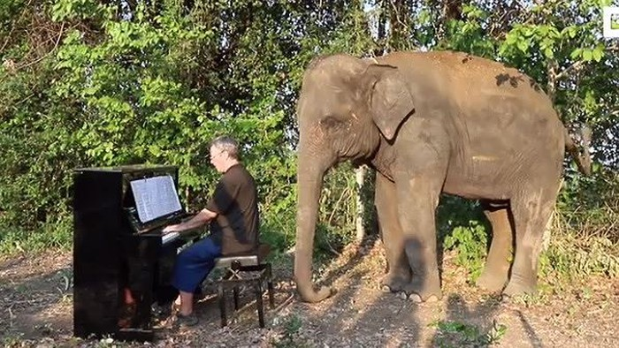 An ủi... những chú voi mù và tàn tật bằng tiếng đàn dương cầm - Hình 1