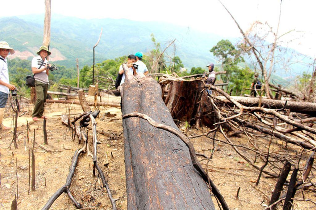 Quảng Nam: Xét xử vụ phá rừng phòng hộ quy mô lớn ở xã Tiên Lãnh - Hình 2