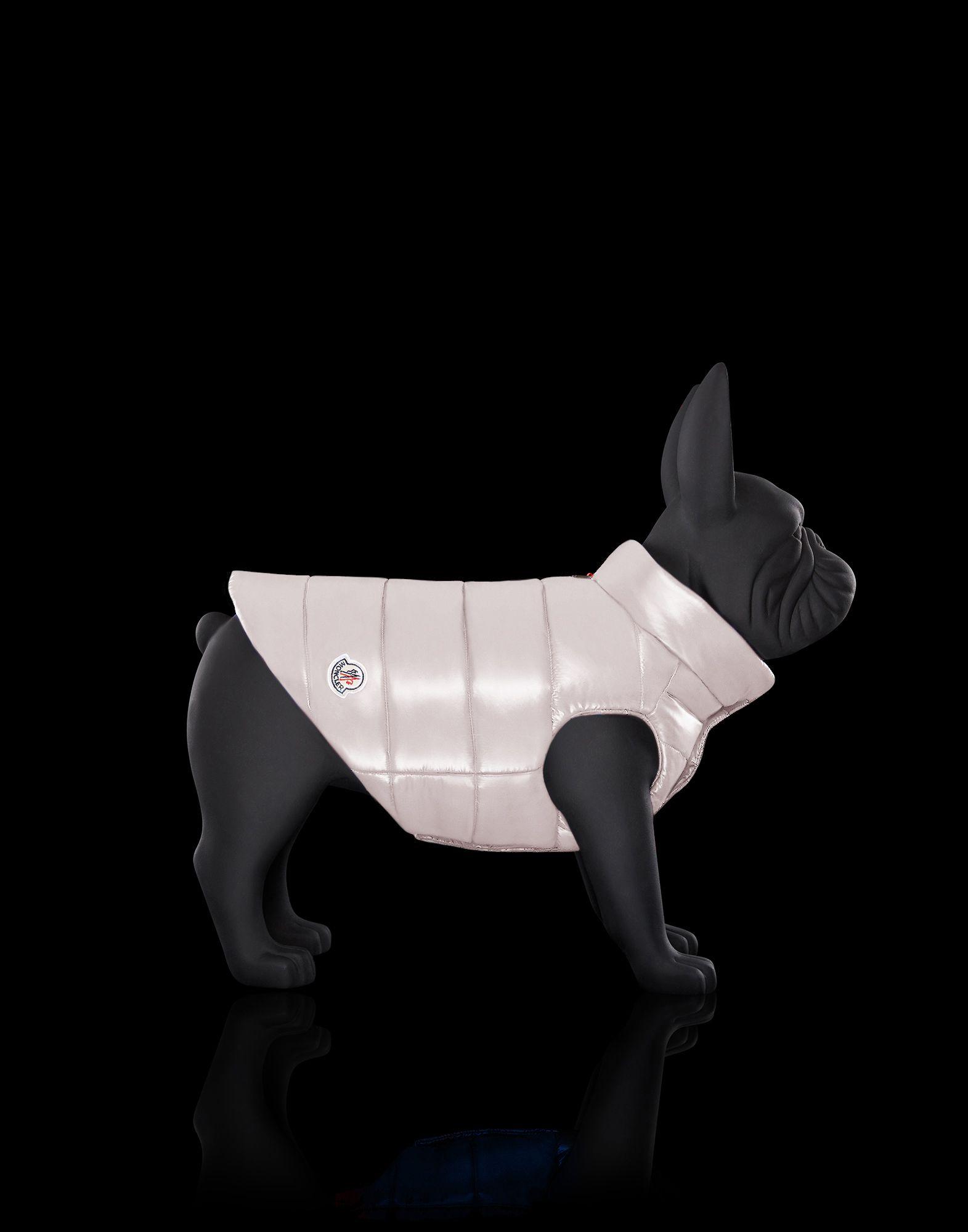 Thương hiệu Moncler tung BST áo khoác cao cấp cho... cún cưng - Hình 3
