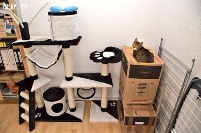25 chú mèo này sẽ giúp ngày buồn của bạn tươi sáng hơn trong chớp mắt! - Hình 9