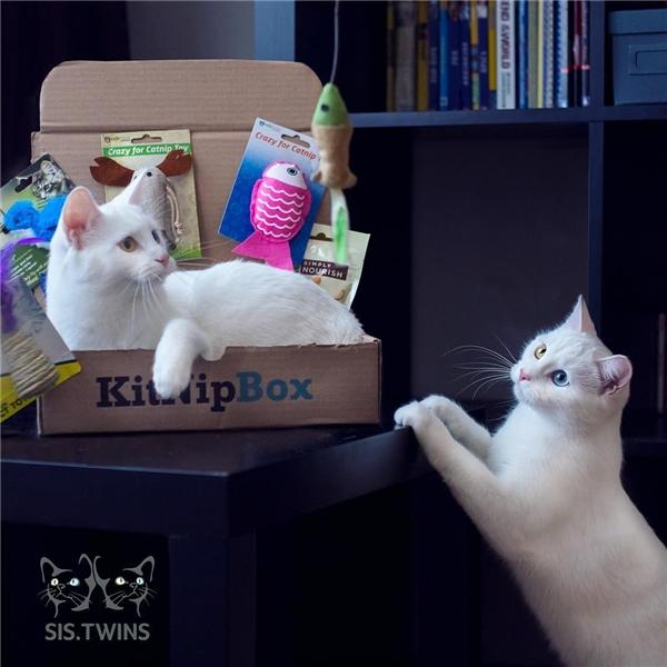 Hai cô mèo song sinh khiến mạng xã hội điên đảo vì sở hữu đôi mắt dị sắc cực đẹp - Hình 10
