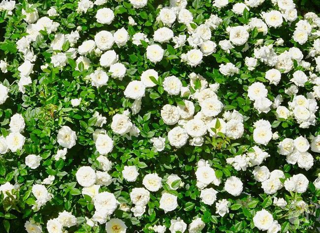 Ngôi nhà với khu vườn 600m² phủ kín các loại hoa đẹp như tranh vẽ của nữ giám đốc Việt ở Hungary - Hình 25