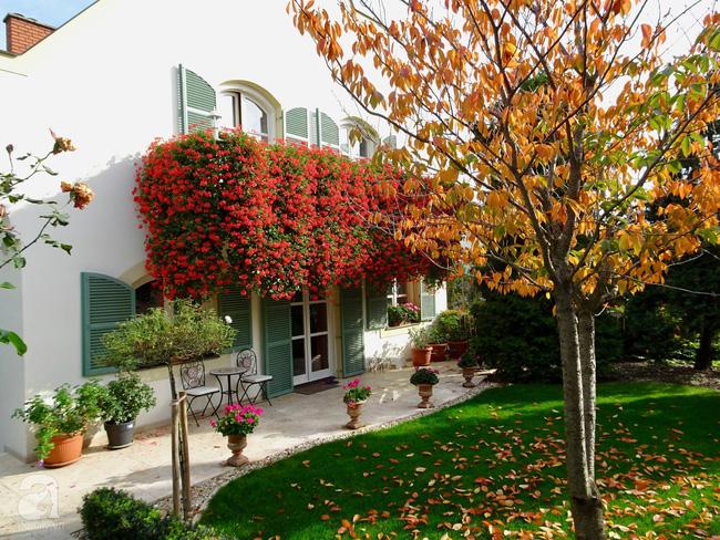 Ngôi nhà với khu vườn 600m² phủ kín các loại hoa đẹp như tranh vẽ của nữ giám đốc Việt ở Hungary - Hình 14