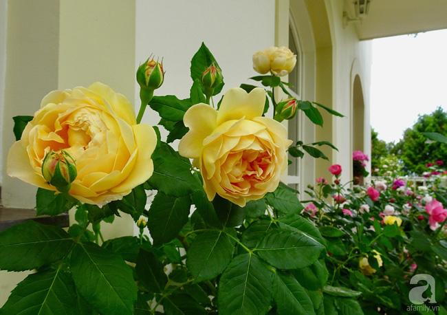 Ngôi nhà với khu vườn 600m² phủ kín các loại hoa đẹp như tranh vẽ của nữ giám đốc Việt ở Hungary - Hình 6